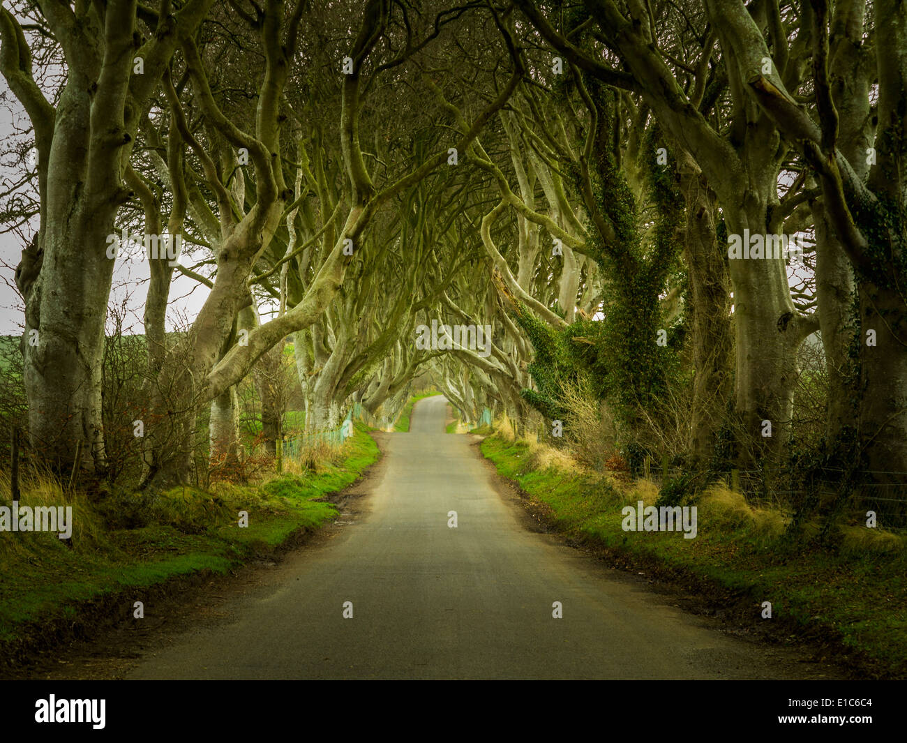 Ireland - Dark Hedges - a famous magical tree-lined road near Ballymoney, County Antrim, Northern Ireland, UK - Stock Image