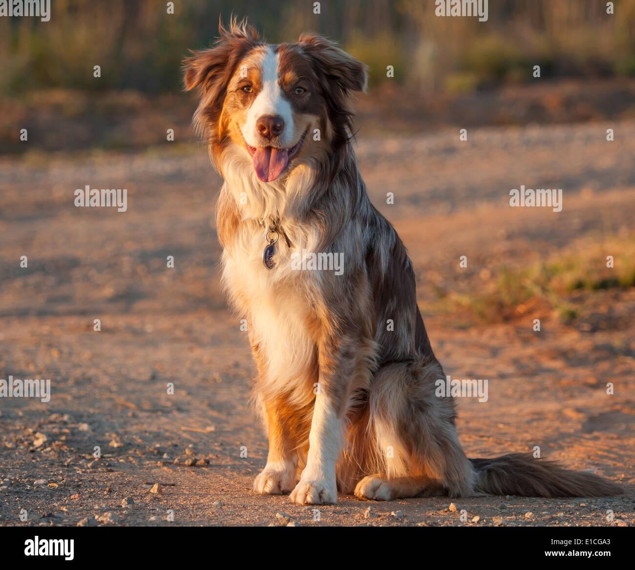 Mix Breed Dog Stock Photos & Mix Breed Dog Stock Images - Alamy