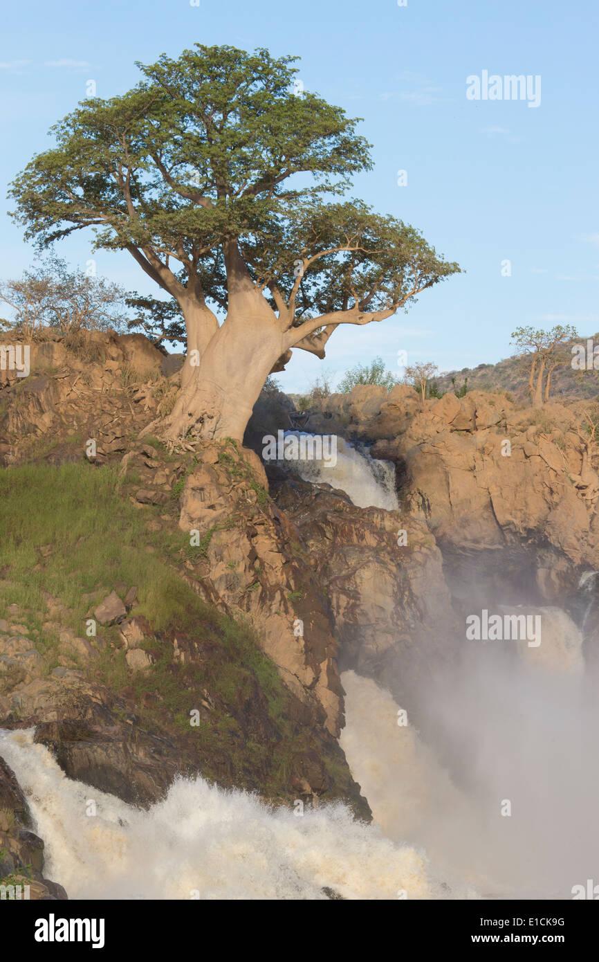 Boabab tree by Epupa waterfalls - Stock Image