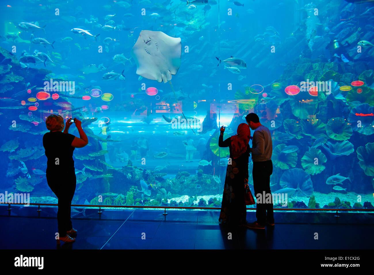 United Arab Emirates, Dubai, Mall of the Emirates commercial center, Aquarium - Stock Image