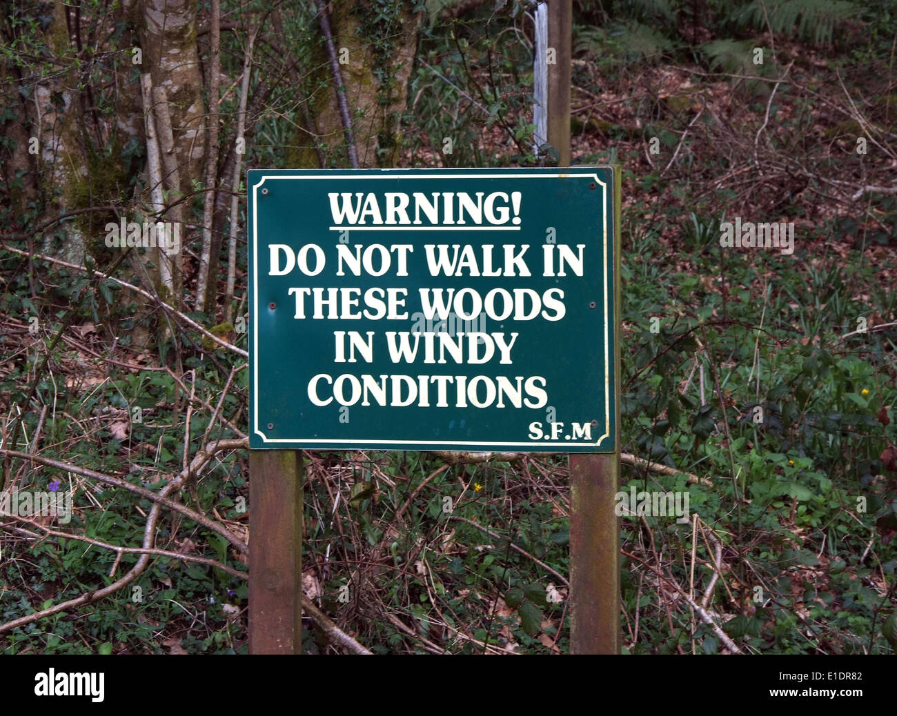sign in woods warning about hazards in windy conditions - Stock Image