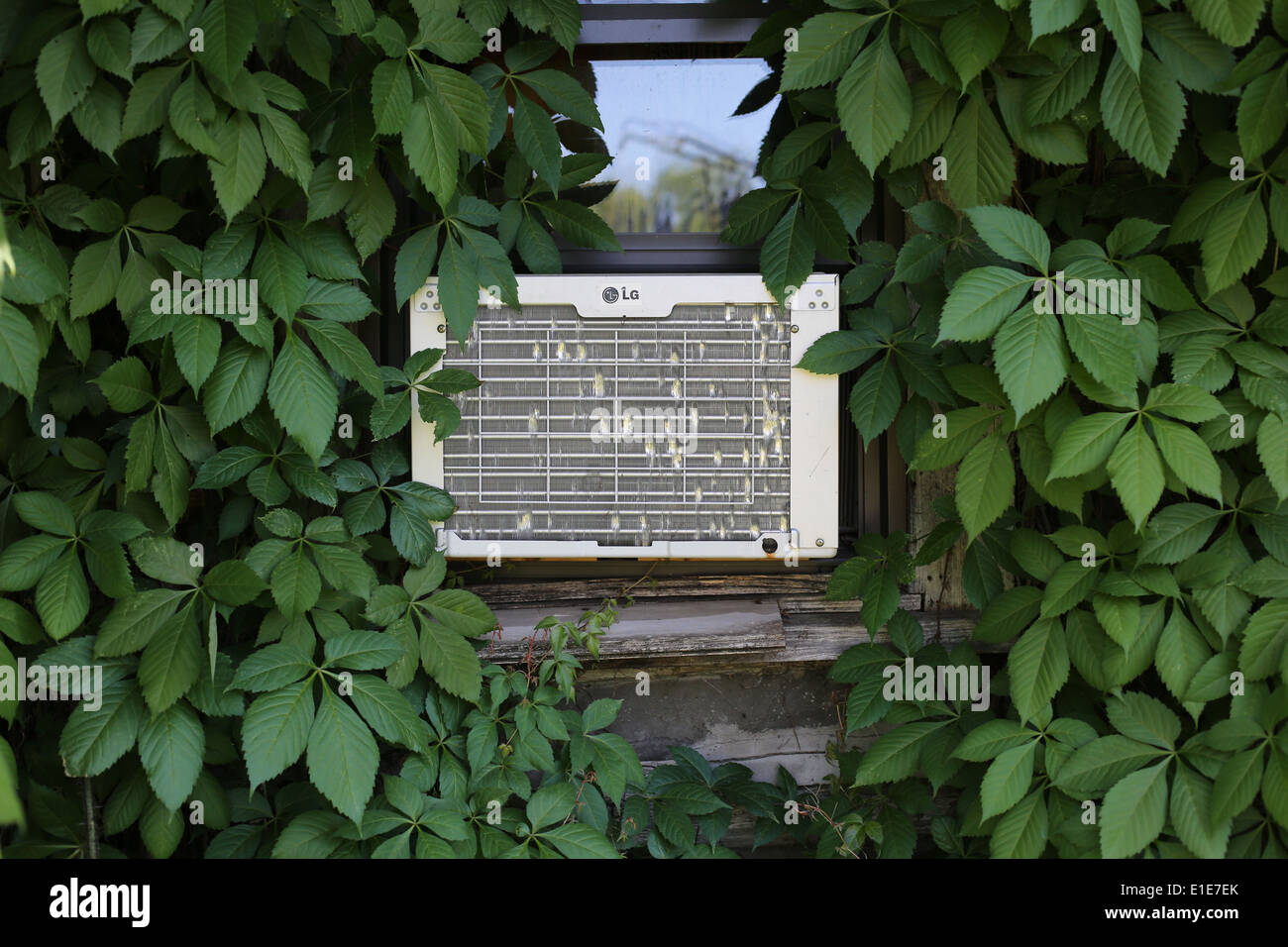 An old window unit air conditioner, surrounded by vines and leaves. - Stock Image