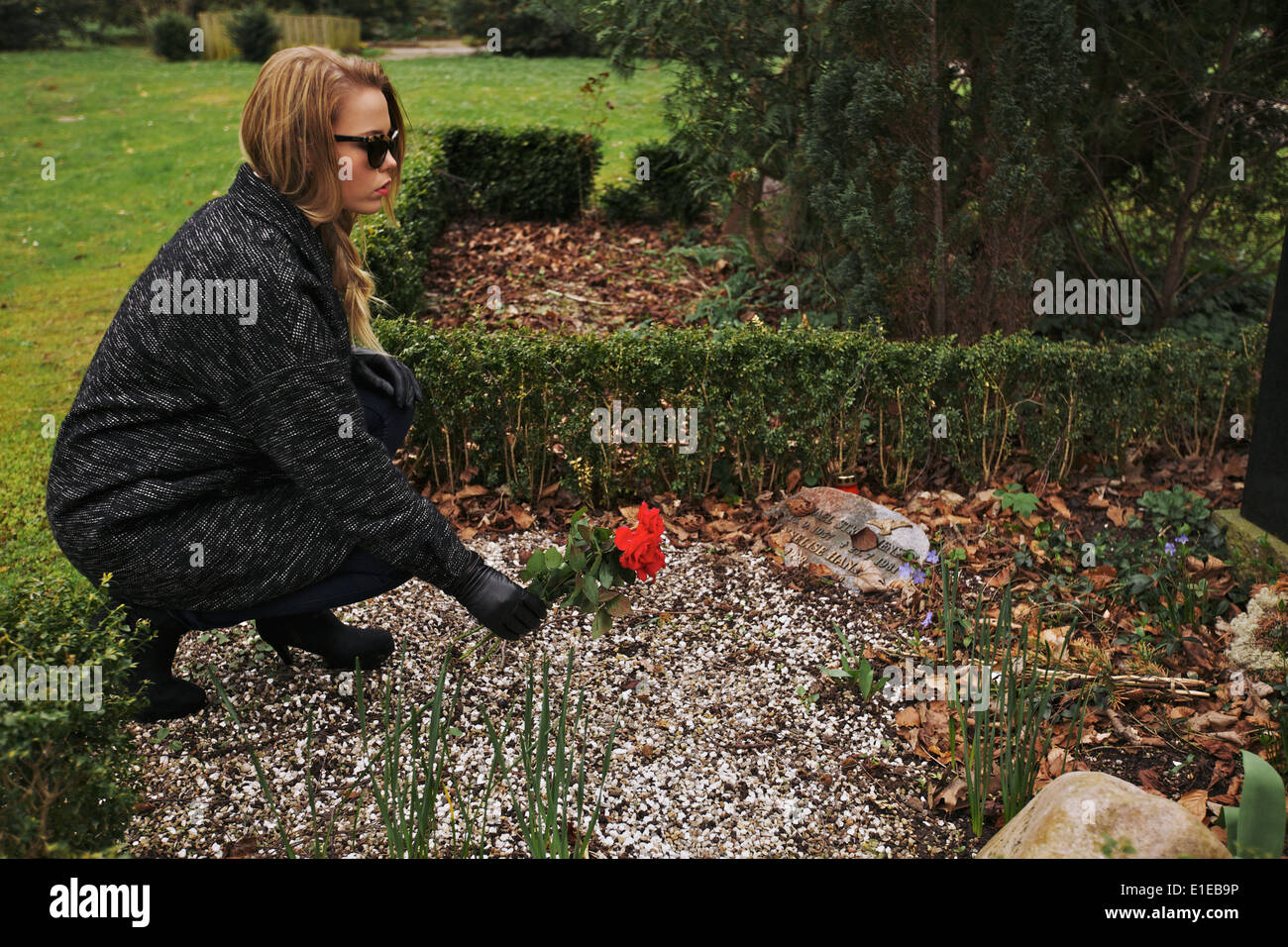 Side view of young woman placing red rose on the grave of her family member at the graveyard. Woman dressed in black grieving. - Stock Image