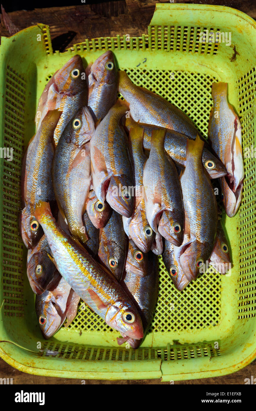 Freshly caught red snapper fish for sale on the quay at St George, Grenada, Caribbean, East Indies Stock Photo