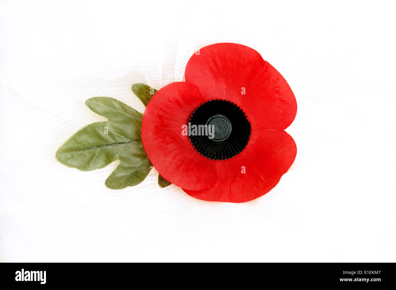 Poppy on a white background the poppy emblem for remembrance & memory of the fallen in wars of the past & ongoing campaigns - Stock Image