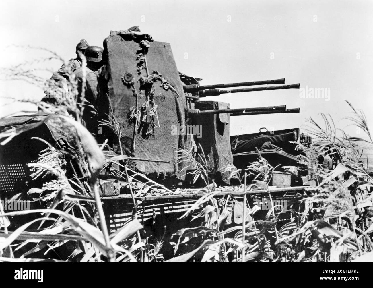 The picture from Nazi news reporting shows German soldiers crewing an anti-aircraft gun (Flak) in a field of sunflowers Stock Photo