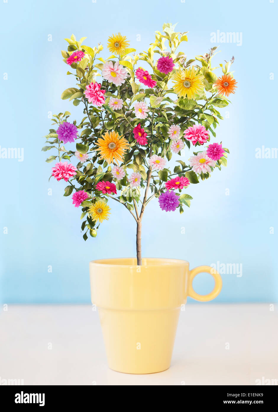 flower tree growing out of yellow coffee cup - Stock Image