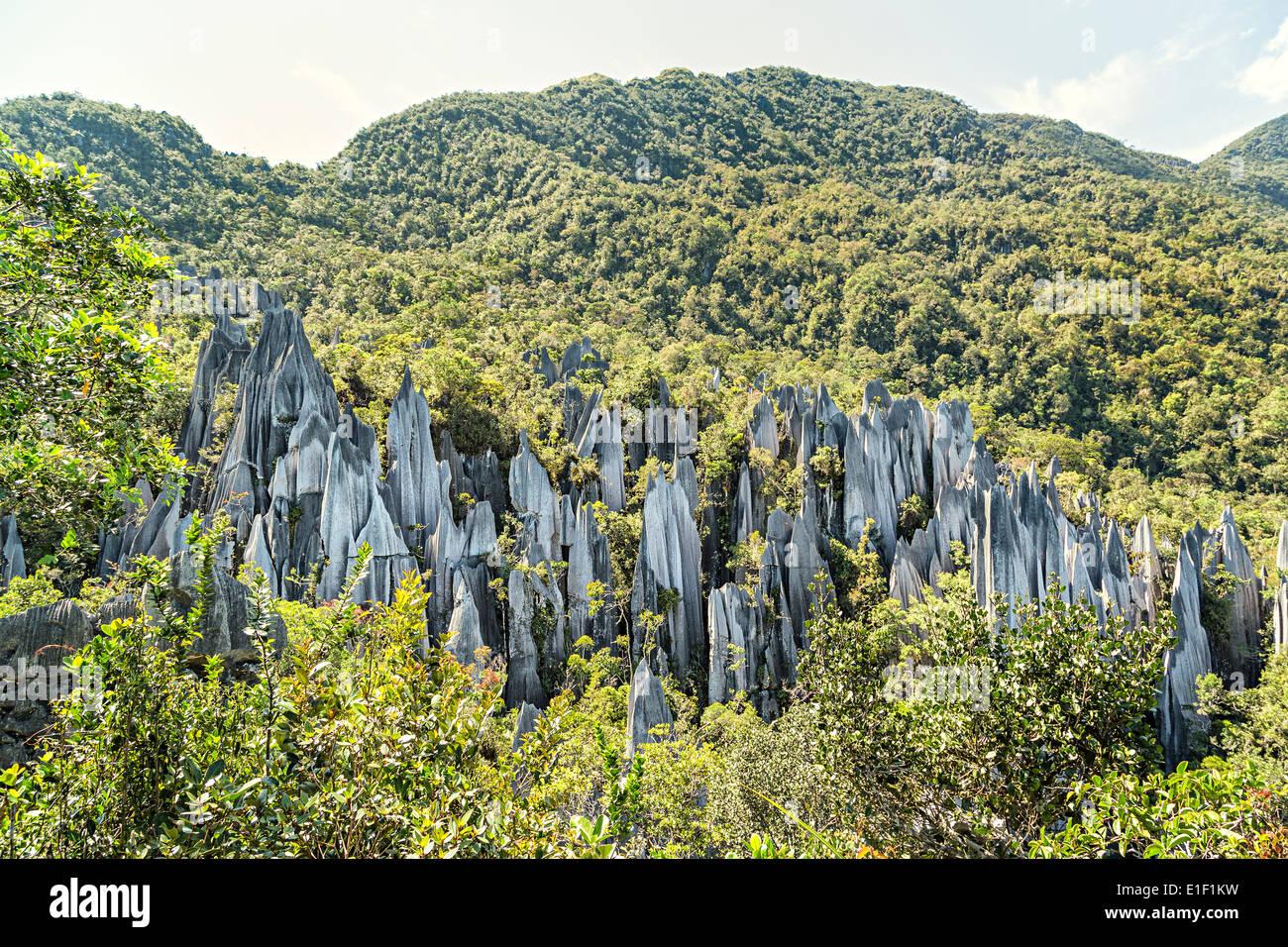 Pinnacles, karst landscape, Gunung Mulu national park, Sarawak, Malaysia Stock Photo