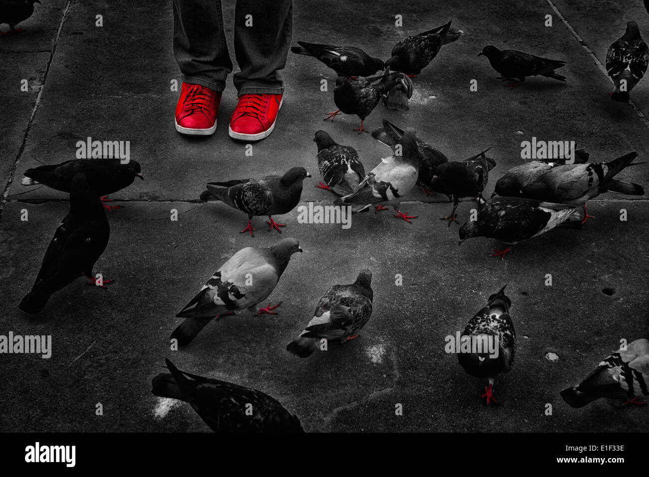 Red snickers  shoe and the pigeons on the street. - Stock Image