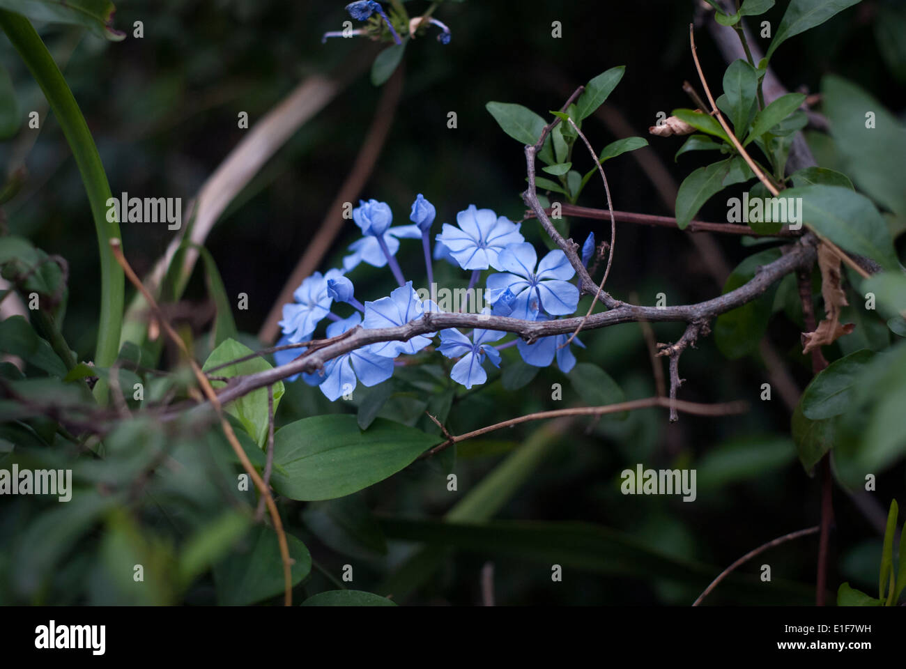 Moon Flowers Stock Photos Moon Flowers Stock Images Alamy