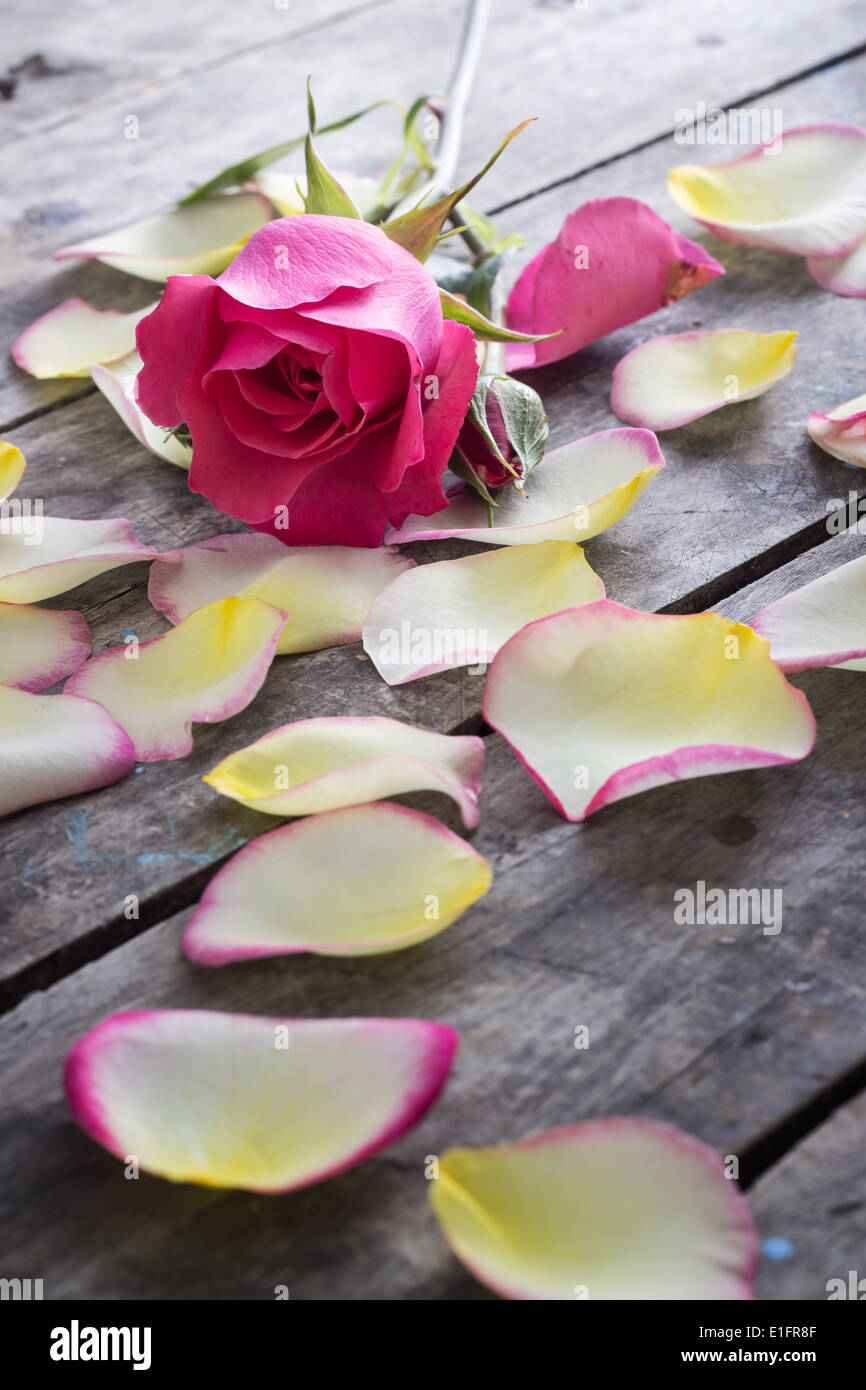 Rose and Rose petals lying down on a wooden table, close up - Stock Image