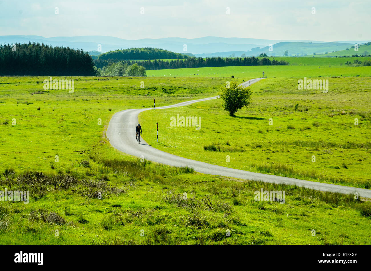 Cyclist on lonely road on Tarn Moor near Orton in the upper Lune valley Cumbria - Stock Image