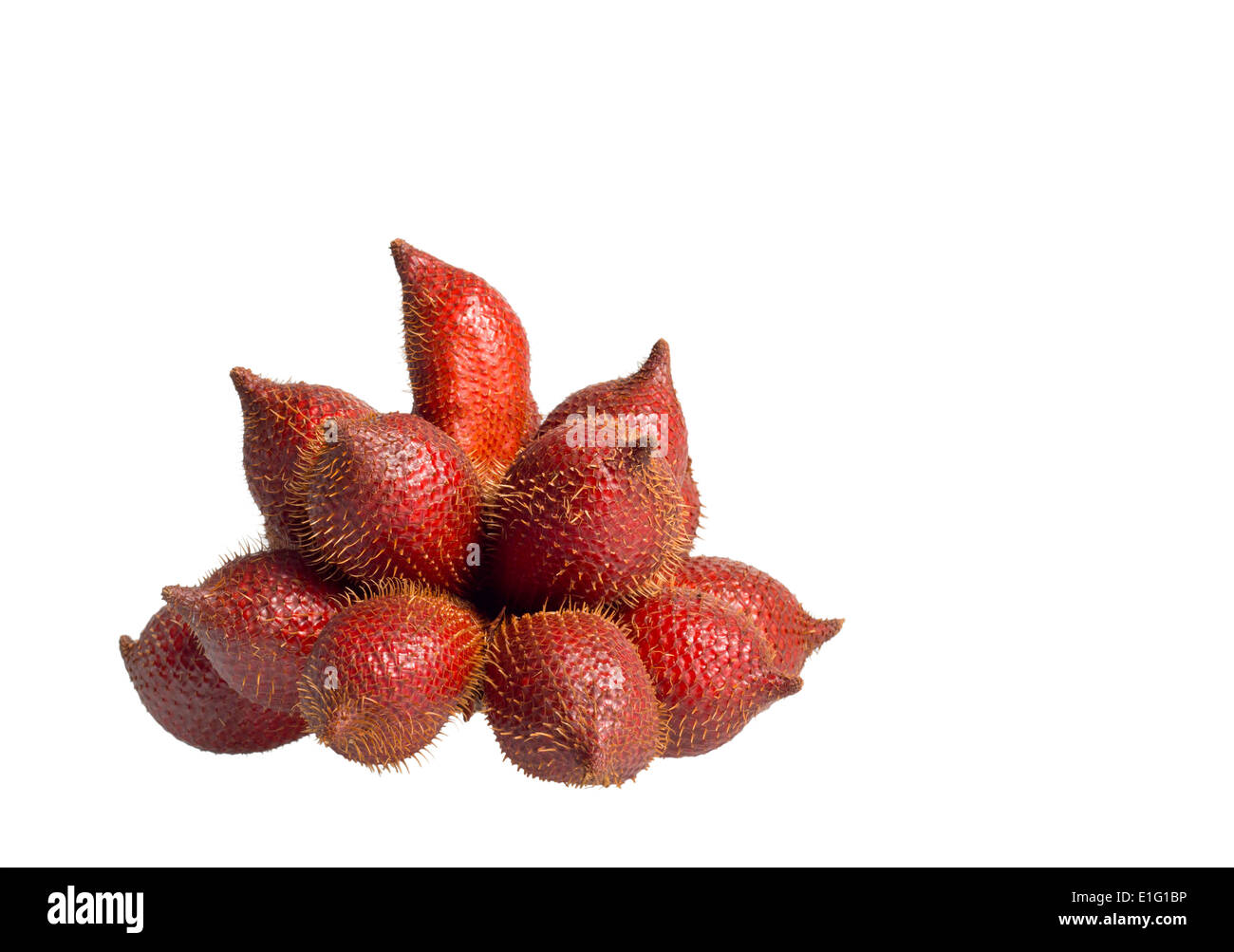 Cluster of ripe Salak on isolate white background - Stock Image