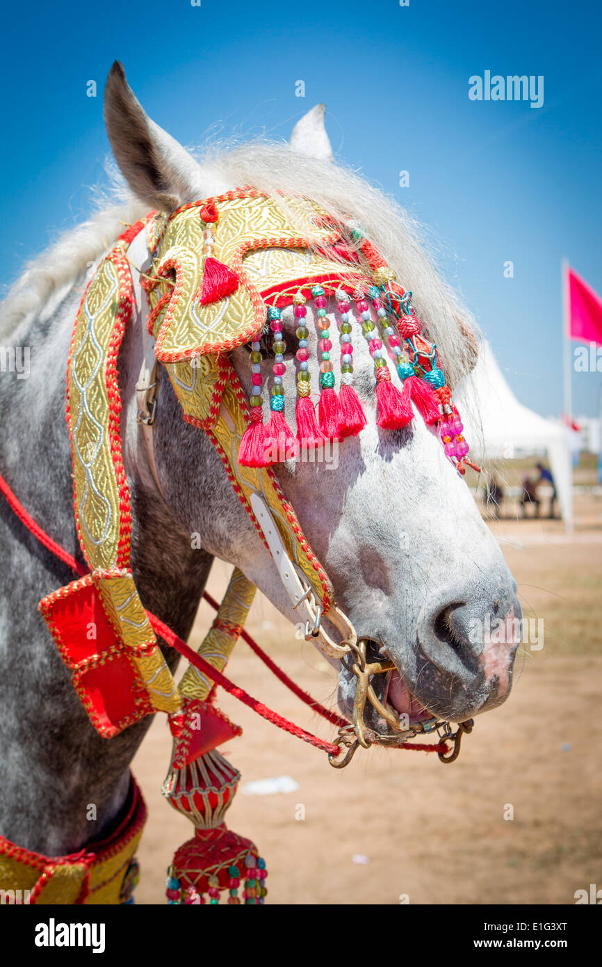 Detail of traditionally decorated Arabian Barb horses performing at a fantasia near Rabat in Morocco. - Stock Image