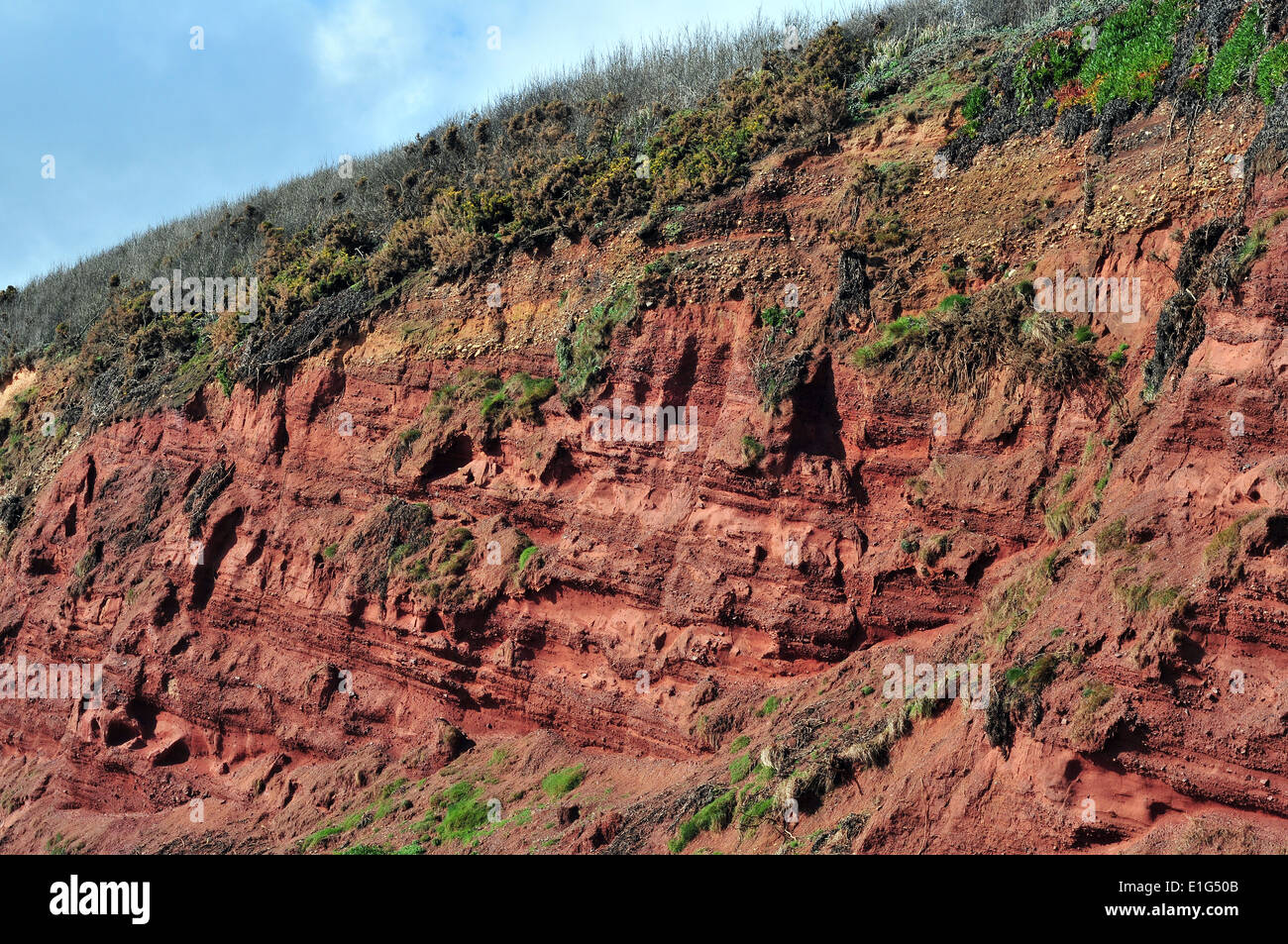 A cliff section of Old Red Sandstone near Langstone Rock, Dawlish, South Devon - showing Devonian stratigraphy. - Stock Image