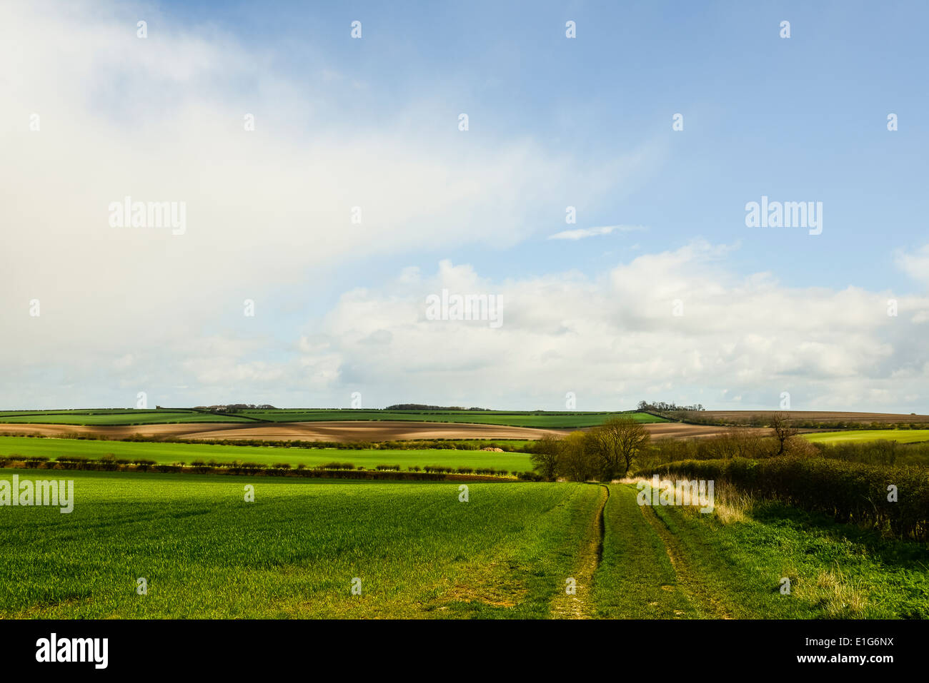 View over Goodmanham Wold from near Arras Farm on the Yorkshire Wolds Way - Stock Image