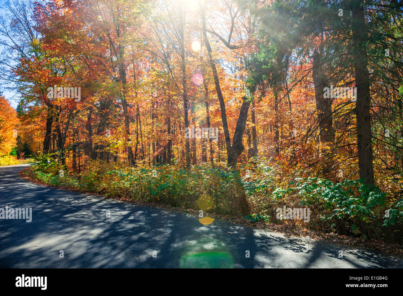 Sunflare in colorful fall forest with country road. Algonquin Provincial park, Ontario, Canada. - Stock Image