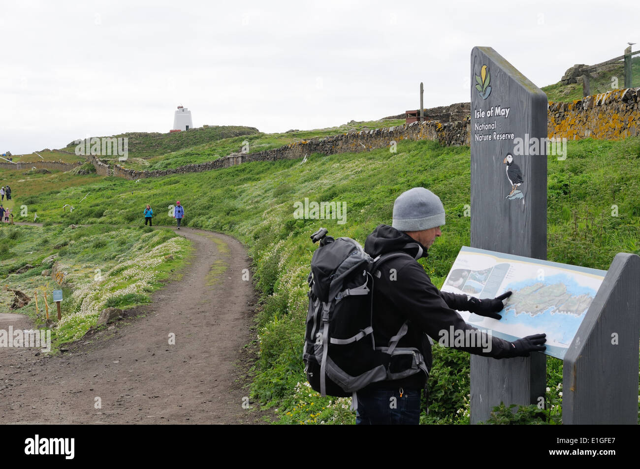 Backpacker studies a pictorial map of the Isle of May National Nature Reserve, Scotland, UK - Stock Image