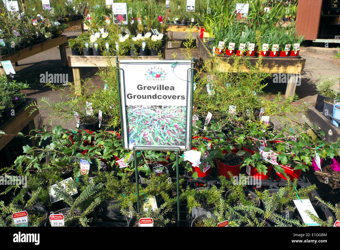Sydney Nurseries And Garden Centers Garden Ftempo