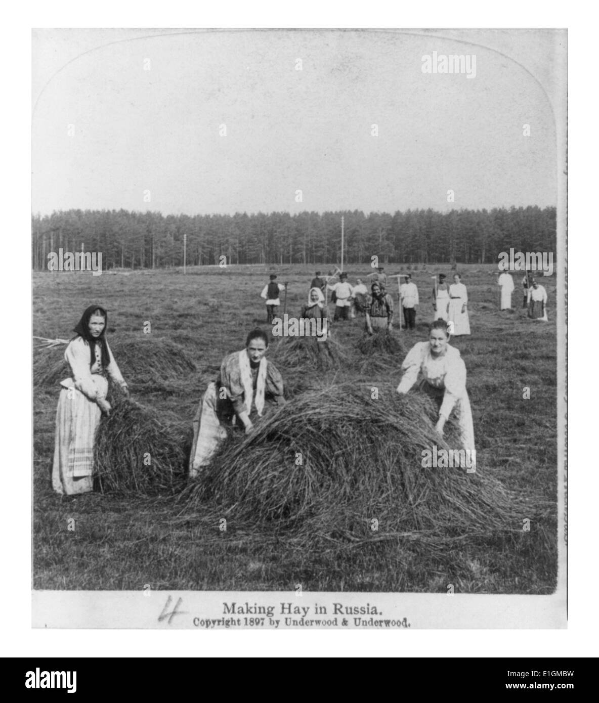 Photographic print of a group of men and women making hay in Russia. Dated 1897 - Stock Image