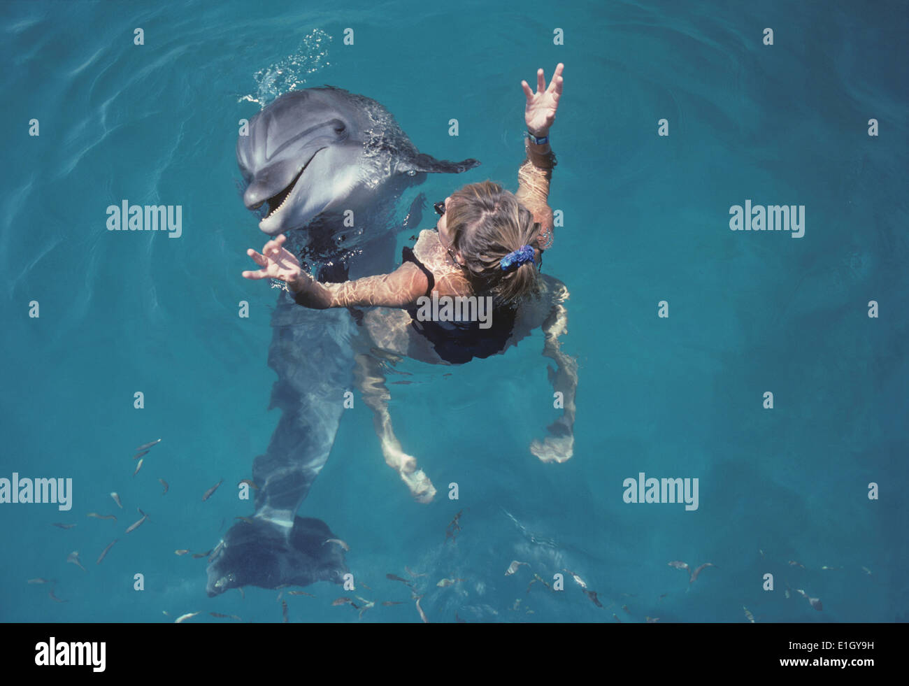 Dolphin trainer interacts with Bottlenose Dolphin (Tursiops truncatus) - Eilat, Israel, Red Sea. Stock Photo