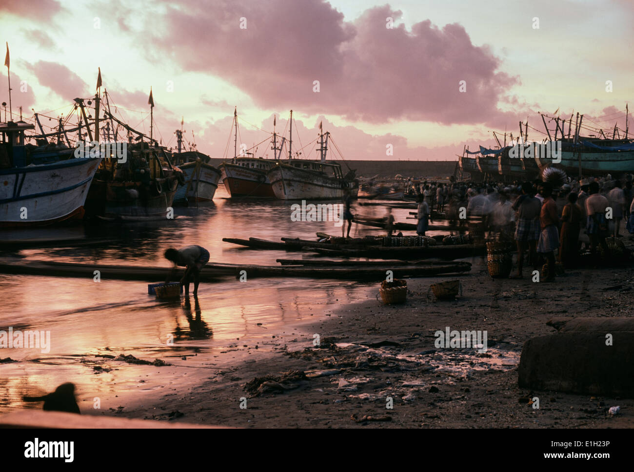 Fish auction, early morning. Thoothoor, India - Stock Image