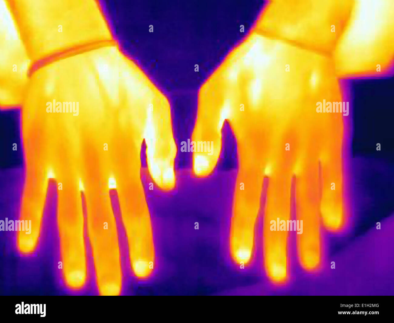Thermal image of weight lifters hands. The image shows the heat left after training - Stock Image