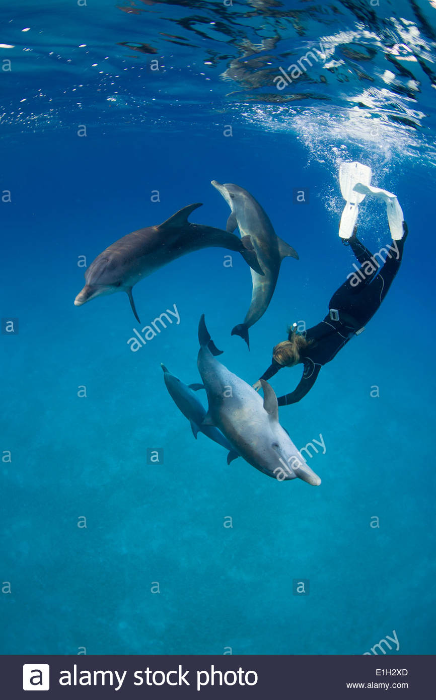 Frolicking with dolphin. - Stock Image