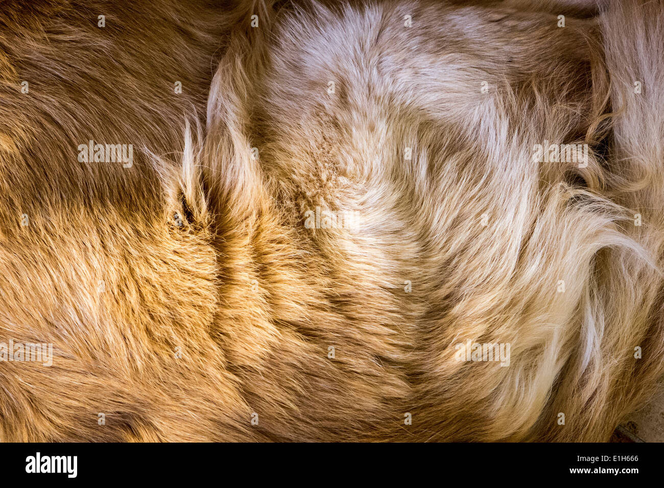 Abstract of dog fur coat - Stock Image