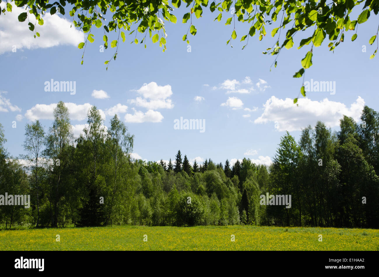 Bright summer pastureland in green and yellow colours at blue sky - Stock Image