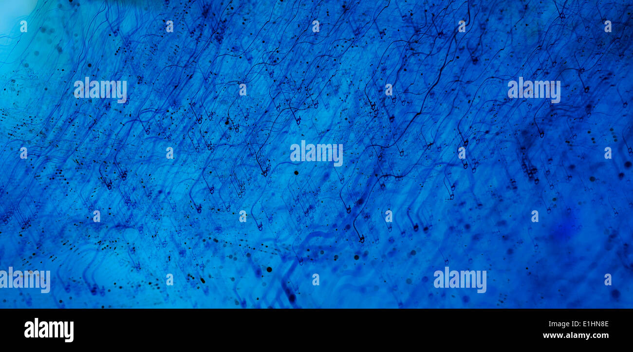 Blue abstract light background - textured paper - Stock Image