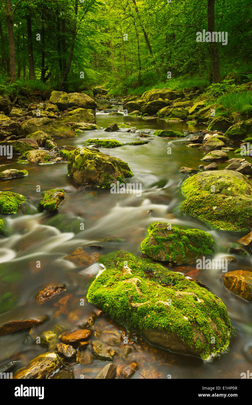 A river through lush forest in the Ardennes, Belgium. - Stock Image