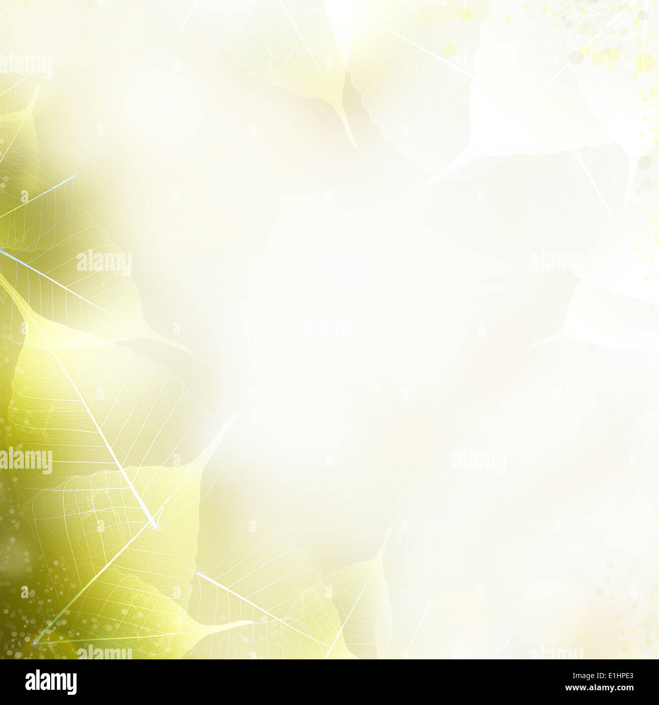 Art background - beautiful nature frame with leaves - Stock Image