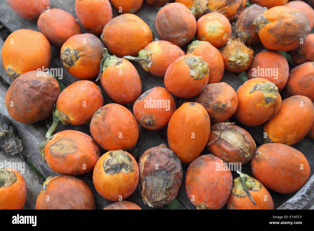 Betel nuts, Havelock Island, Andaman, India - Stock Image