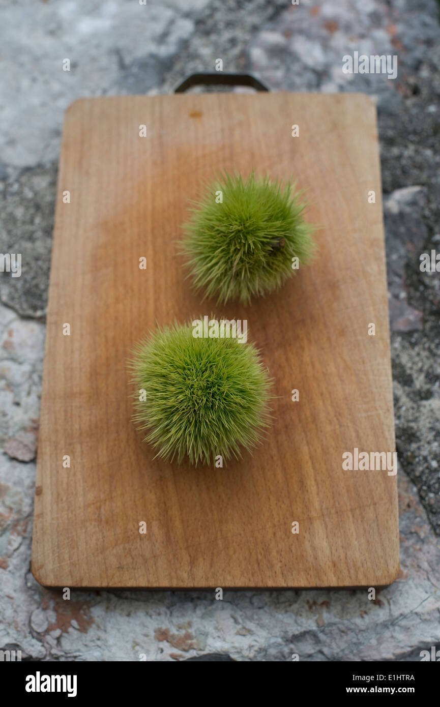 Two chestnuts, Castanea sativa, on chopping board Stock Photo