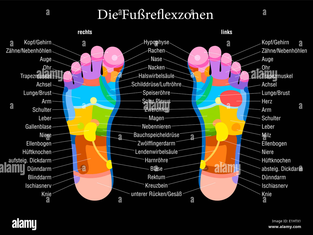 Foot Reflexology Chart With Accurate Description German Labeling