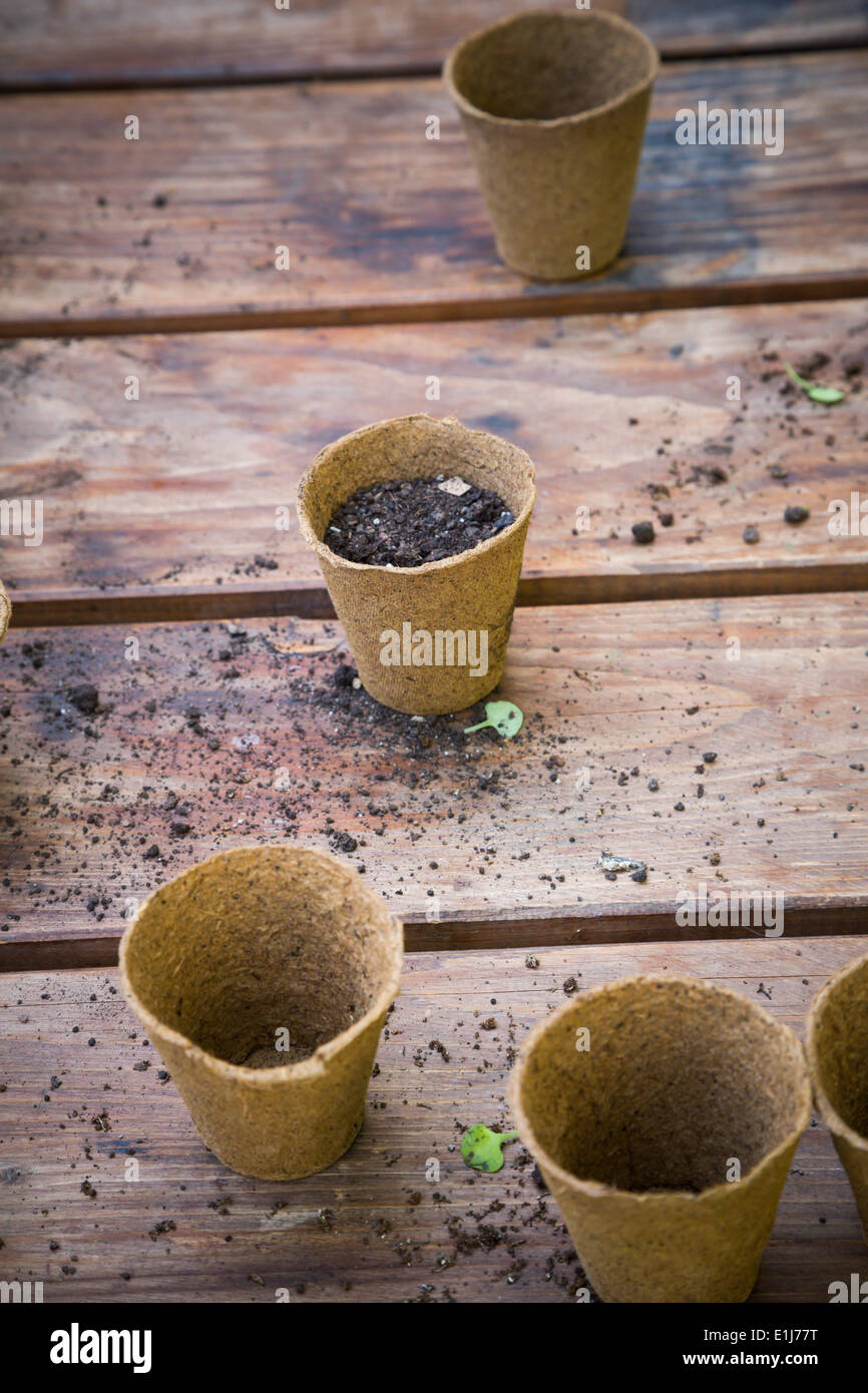 wooden table with nursery pots and soil - Stock Image