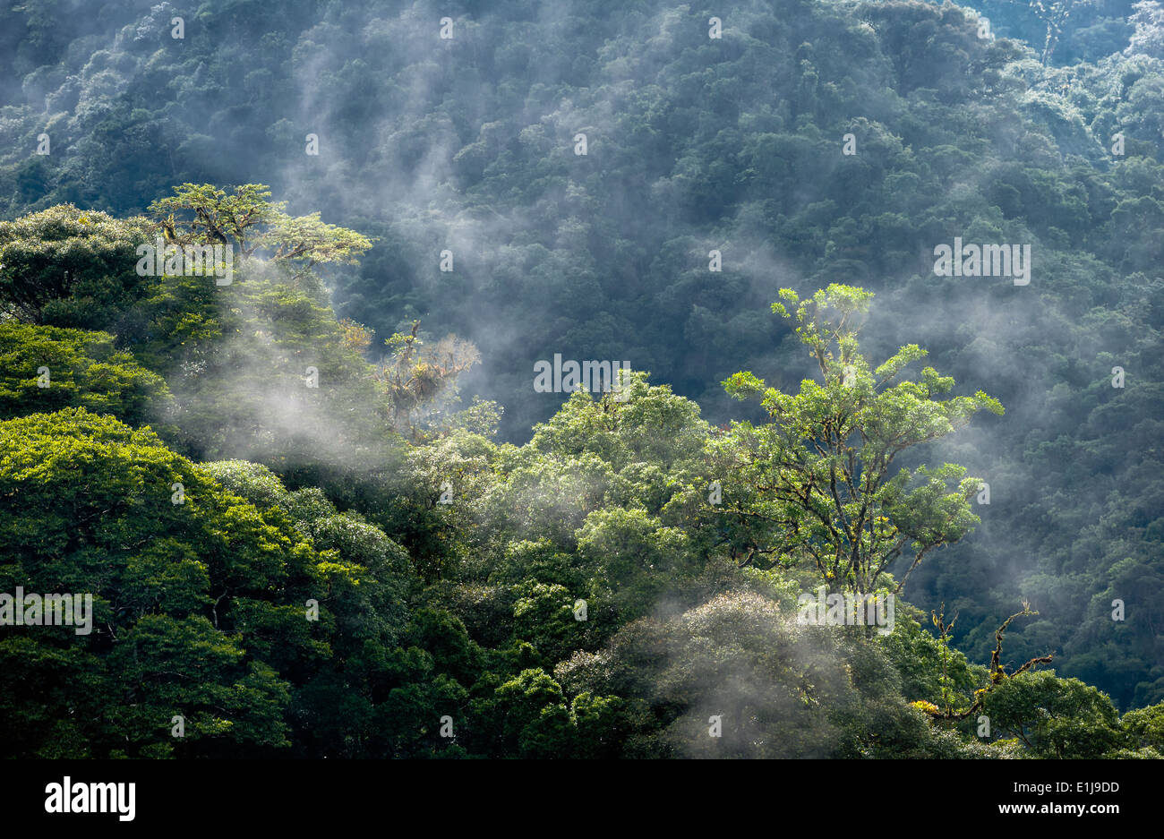 Mist rising from the Atlantic rainforest - Stock Image