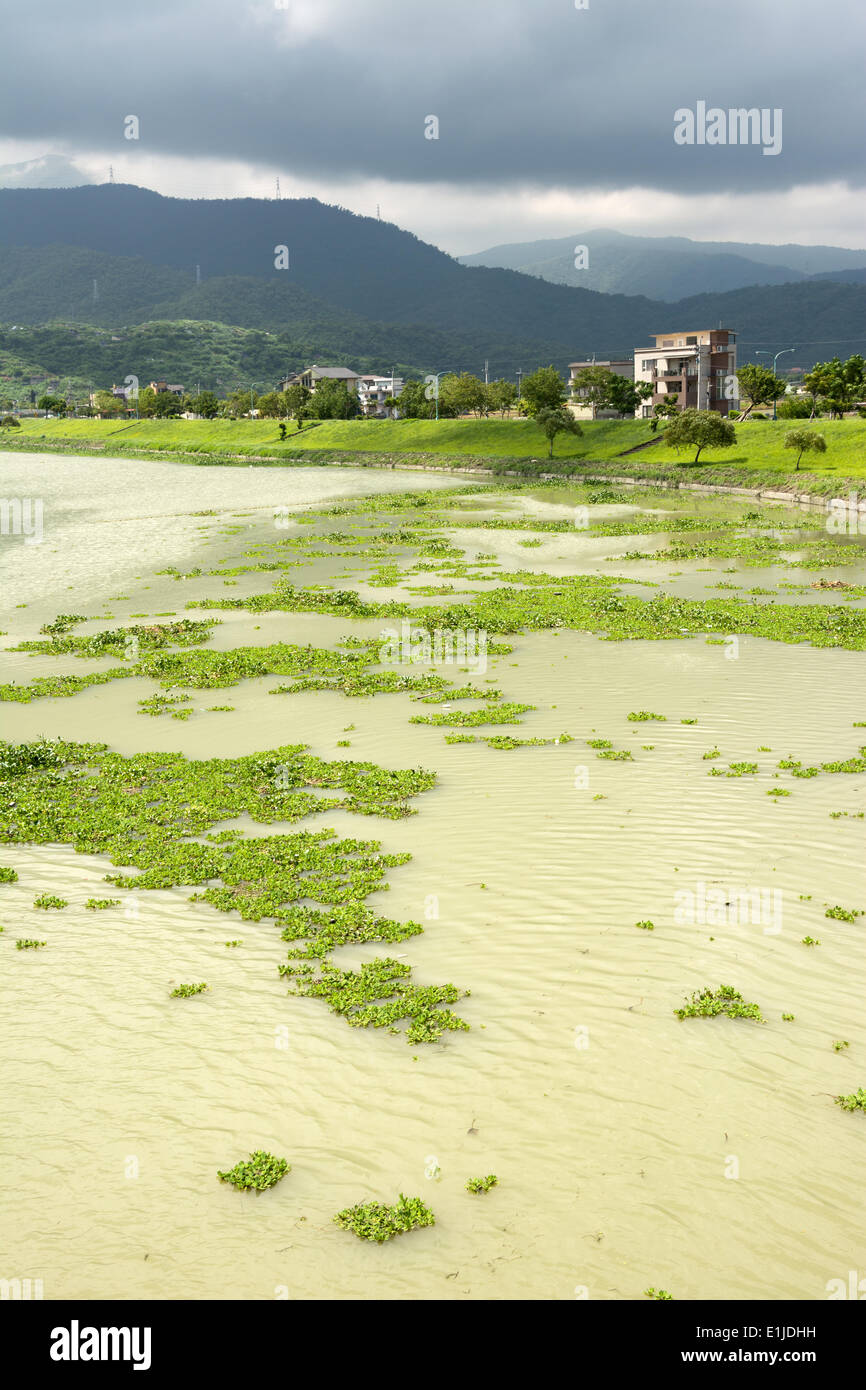 Contaminated overgrown river - Stock Image