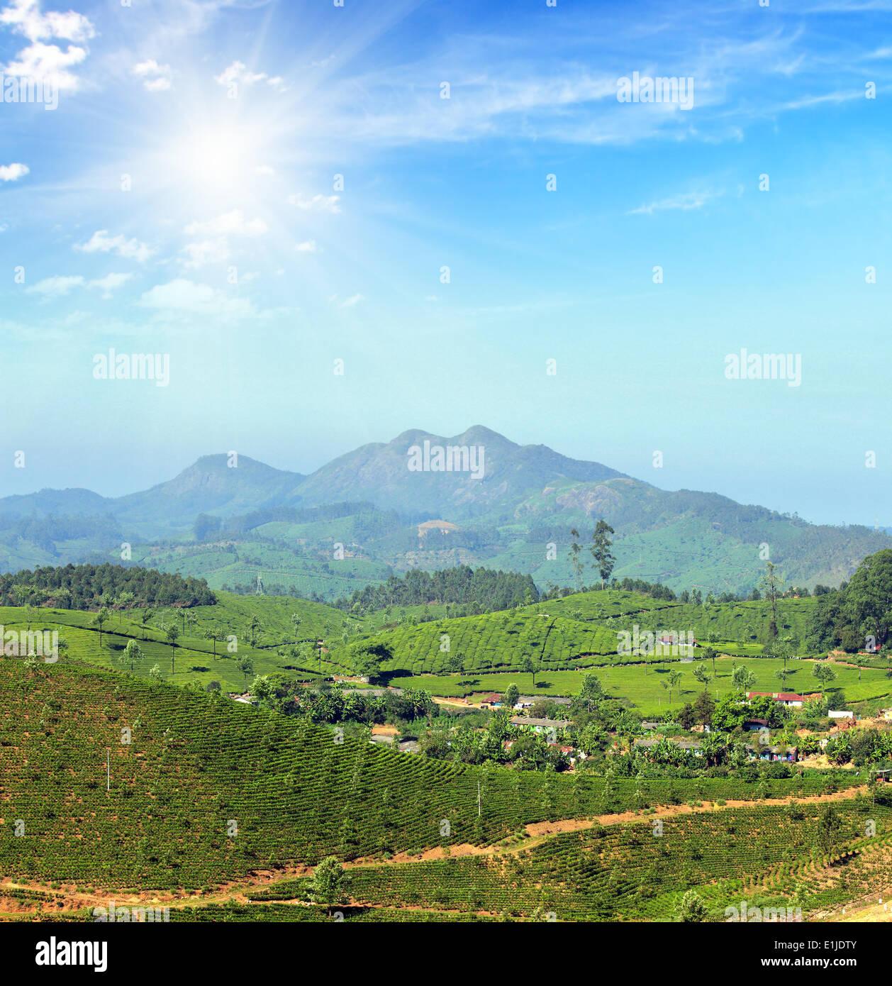 mountain tea plantation landscape in India - Stock Image