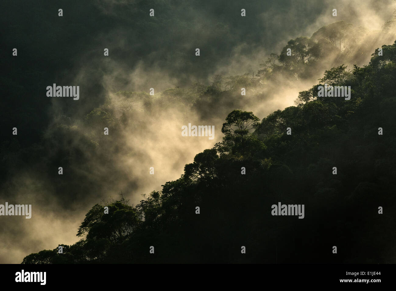 Cloud forest in the early morning - Stock Image