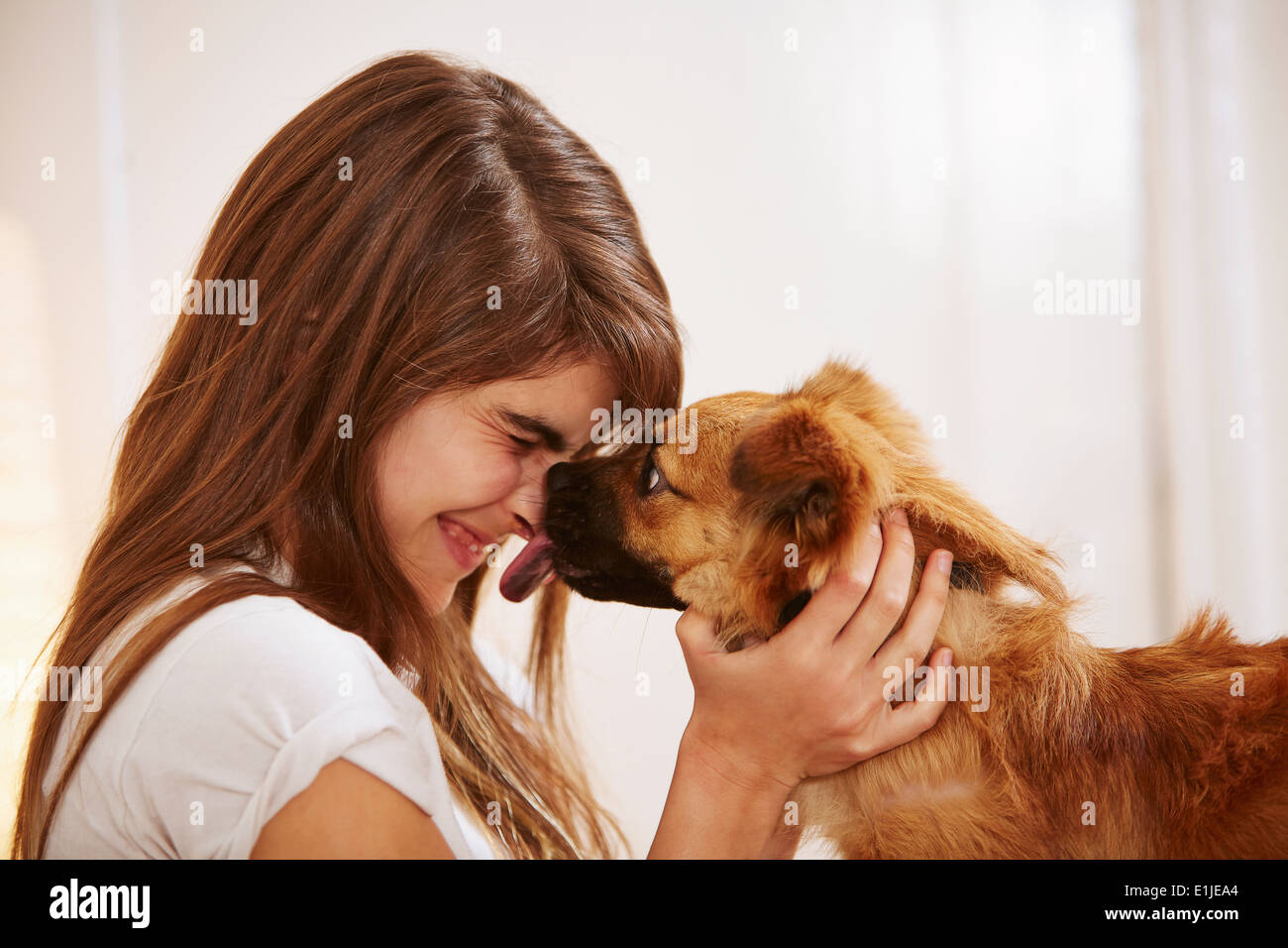 Young woman having face licked by pet dog - Stock Image