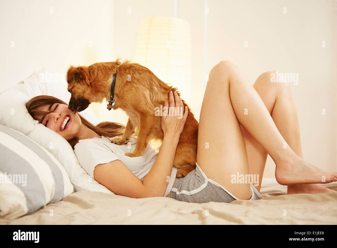 Young woman lying on bed having face licked by pet dog - Stock Image