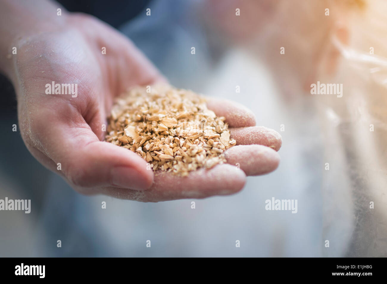 Close up of male hand holding two row grain for home brew beer - Stock Image