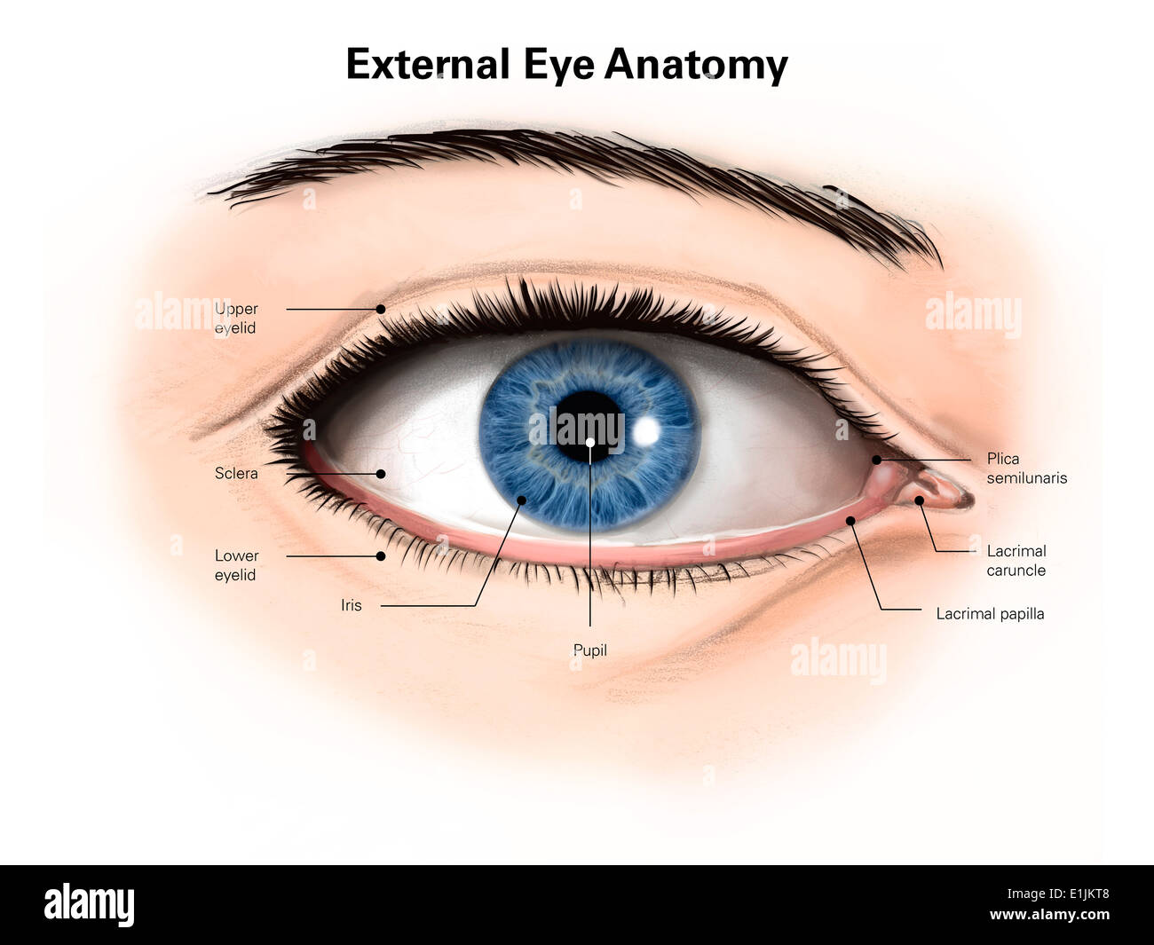 External anatomy of the human eye (with labels Stock Photo: 69866840 ...