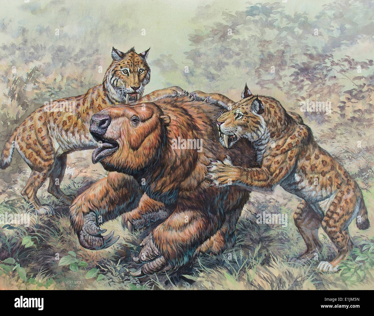 Smilodon dirk-toothed cats attacking a Glossotherium ...