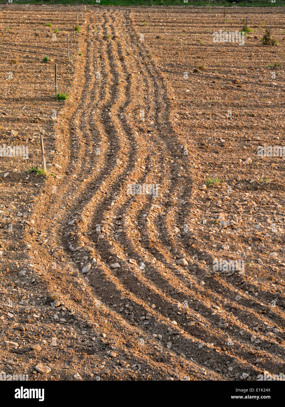 Stony Ground, A Freshly Plowed Field. A field being newly planted to grape vines displays the lines of recent cultivation. - Stock Image