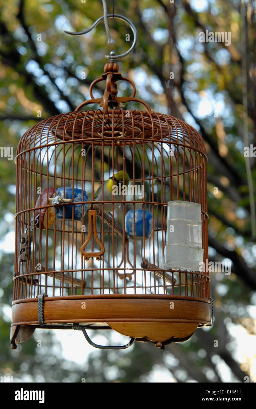 Bird singing contest - Stock Image