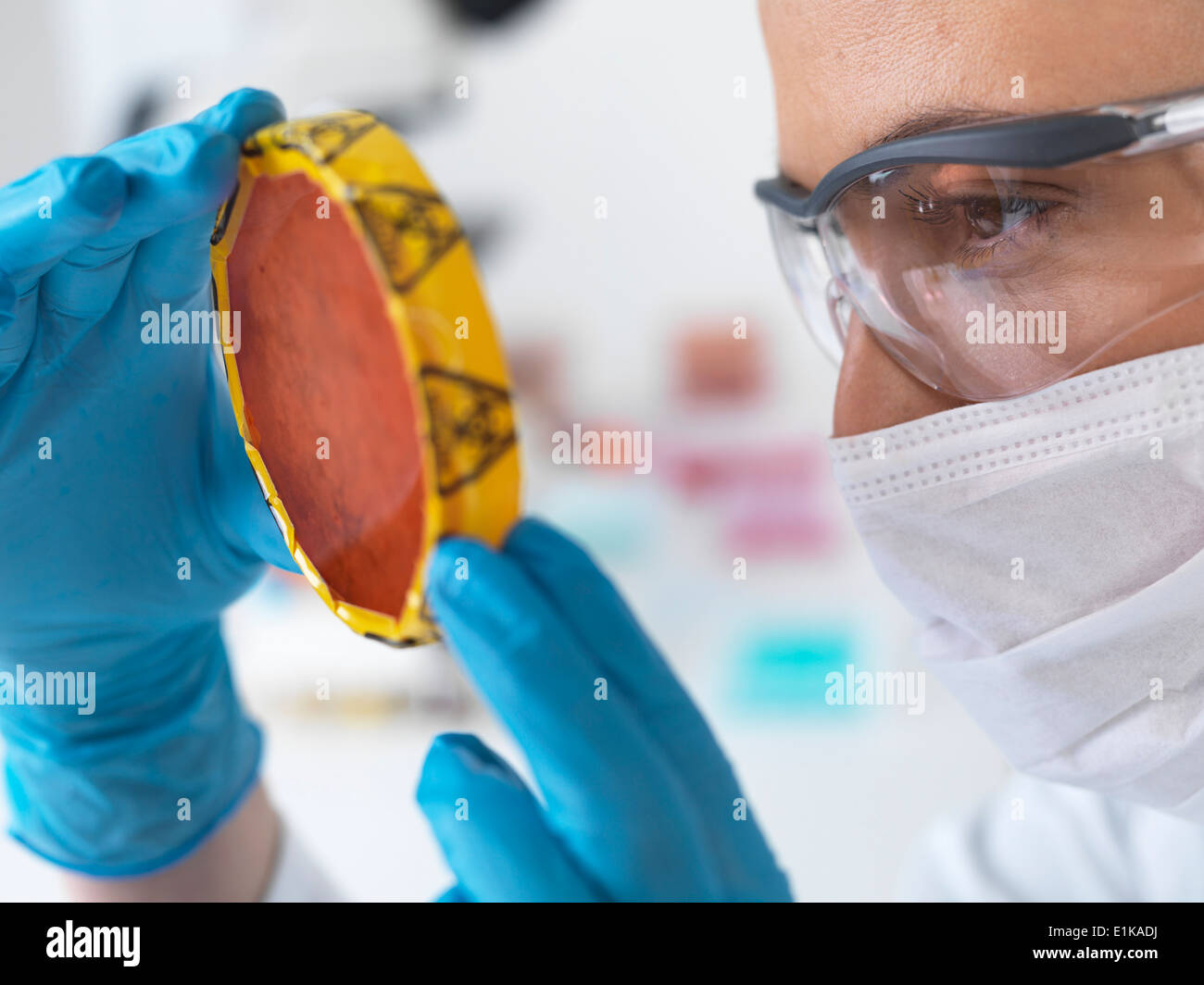 Female scientist holding petri dish with hazardous biological cultures. - Stock Image
