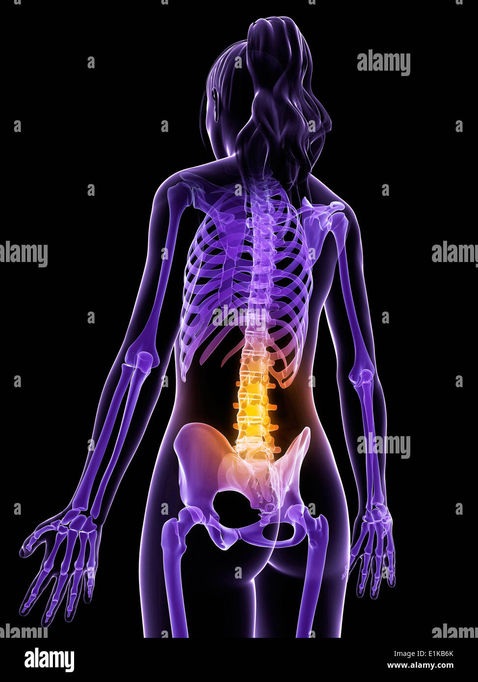 Female anatomy of the back and spine computer artwork Stock Photo ...